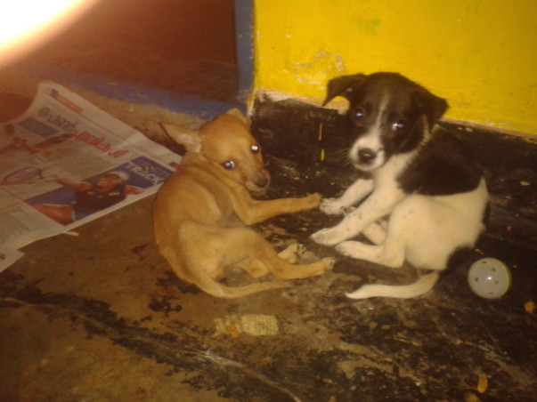 Feed & home Cherai Tails pups