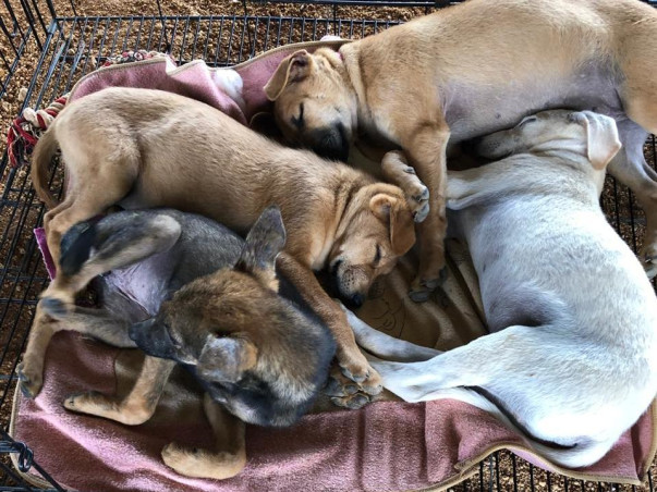 Help Geetha In Her Journey To Help The Strays Of Our Community