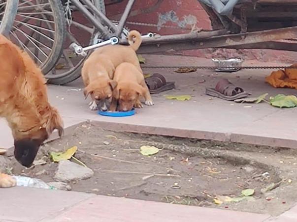 Help Sky-Umeed ka Aashray to feed with Straybies