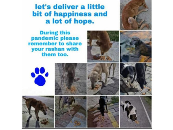 HELP FEED THE HUNGRY STRAY DOGS AND PUPS FROM YOUR HOME DURING CORONA