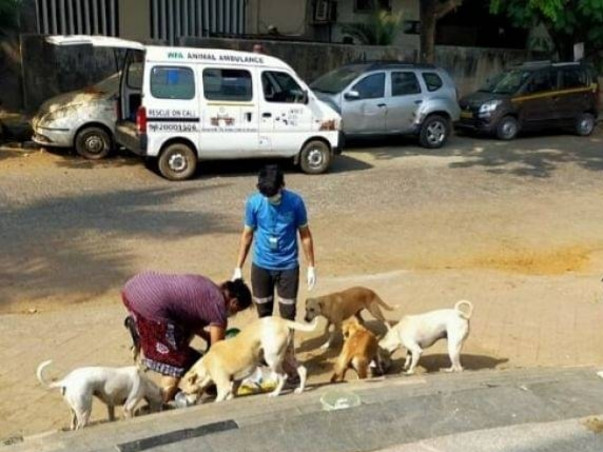Help us rescue and care for hungry animals