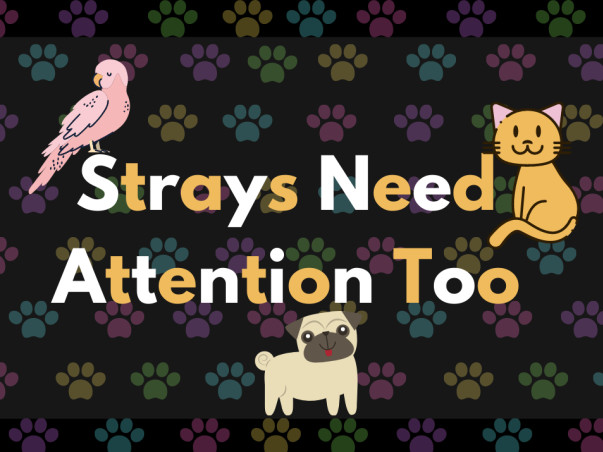 Strays Need Attention Too