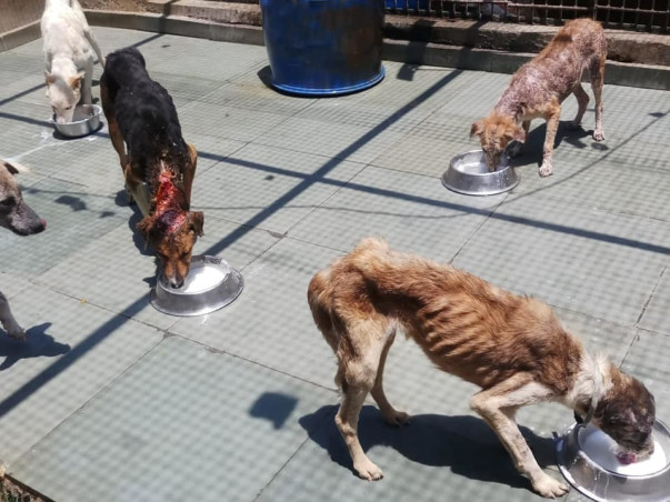 Help Underprivileged Child Education, Health, Animal & Nature abusing