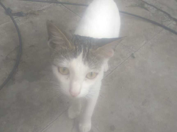 Stray Cats in Pune need your help!