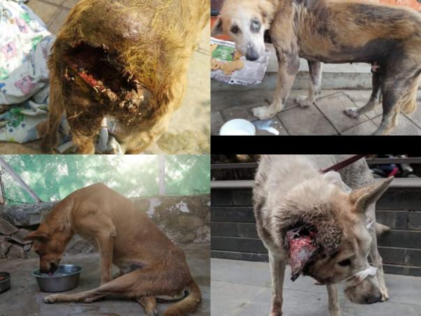 Help us make safe shelter for 1000's of sick & injured street animals