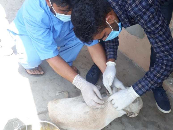 Help KAWF Restart Rescue Operations