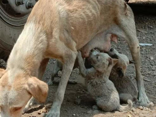 Help for stray Animals
