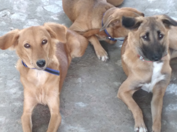 Help me saving my stray dogs shelter home of 40 dogs
