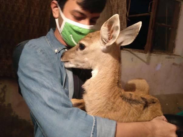 Help Wildlife to Survive.