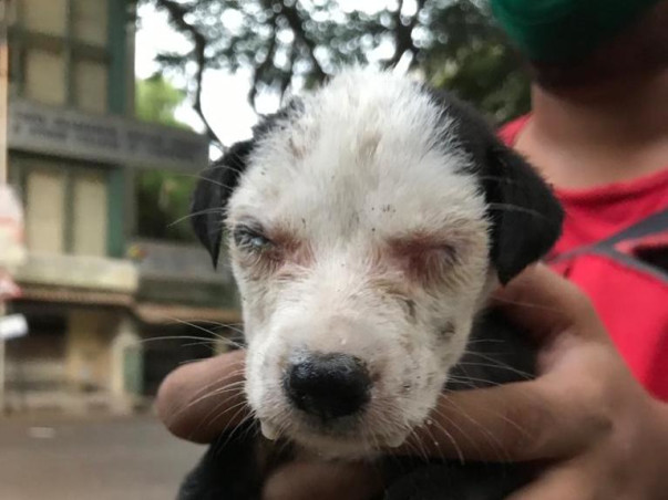 From us to all: Animals need medical help too!