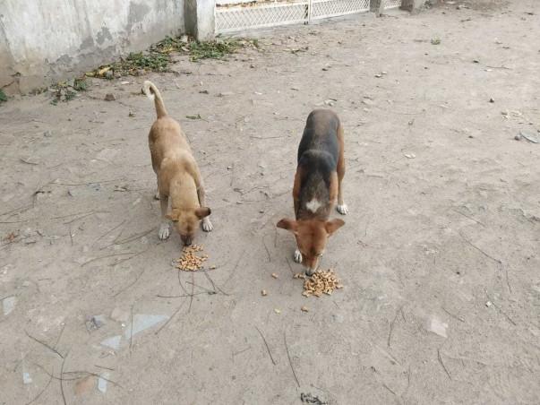 For Help Street Animal