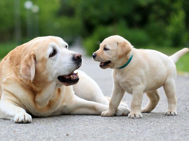Community for Dog Parents