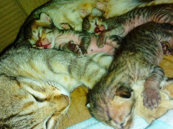 Help Stray Animals From Dying Of Hunger