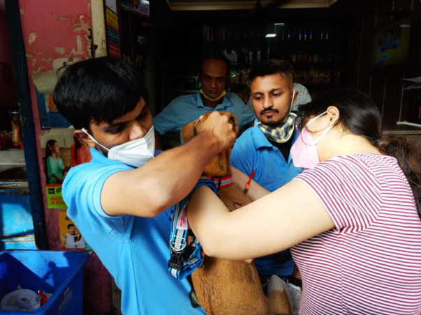 Saving Stray Dogs with Reflective Collar and Anti-Rabies Vaccination