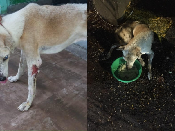Support Me To Rescue Blind Dog
