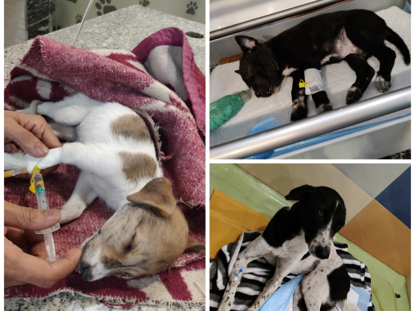 Help For The Treatment Of The Stray Dogs And Other Animals.