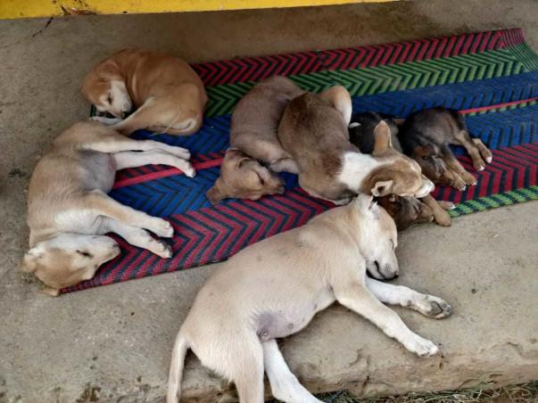 Urgent Help for Animals Needed