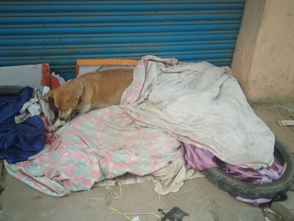 Help us save the Stray dogs and cats of Palamu
