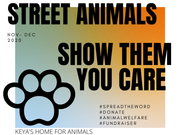 Support street animals to survive this winter!