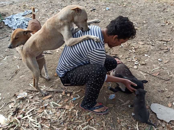 Help me in feeding and treatment of street dogs