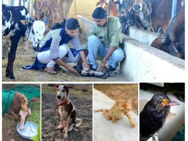 Support the Orphanage of Handicapped Animals to Survive & Restore!