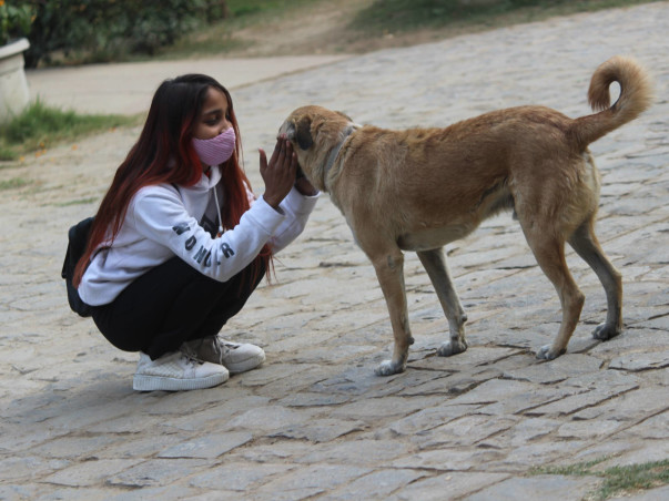 Help us feed and treatment strays animals