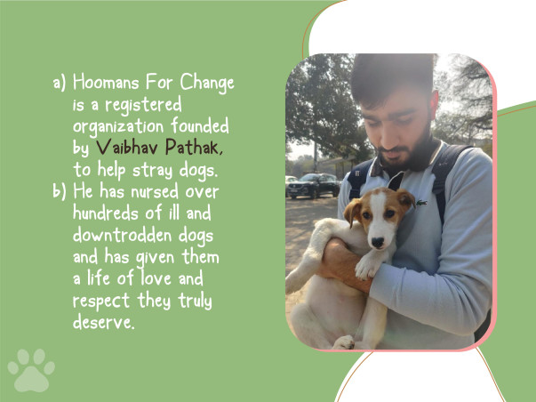 Help Us Feed Stray Dogs In The Current Pandemic