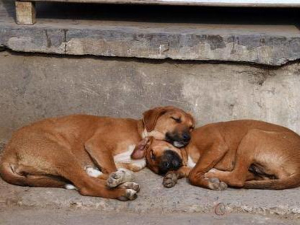 Help Feed Hundreds Of Stray Dogs During The Second Season Of COVID.
