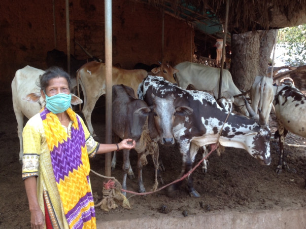 Help Shanthi's Rescue Cows
