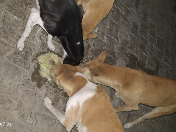Help us for rescue and feed to strays