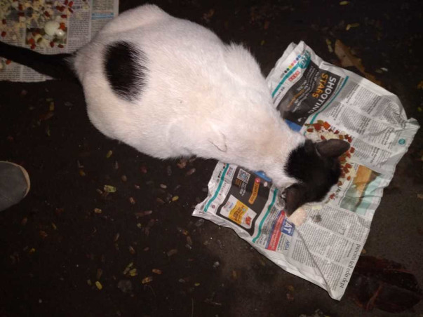 Help stray cat Queen with her life-saving surgery