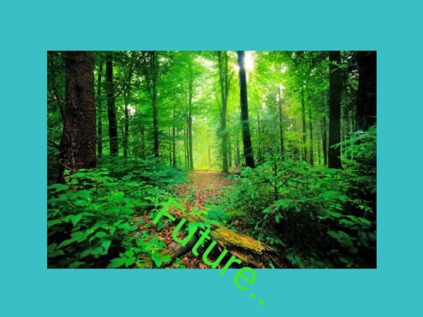 51 पेड़ परियोजना ..🌳🌳
