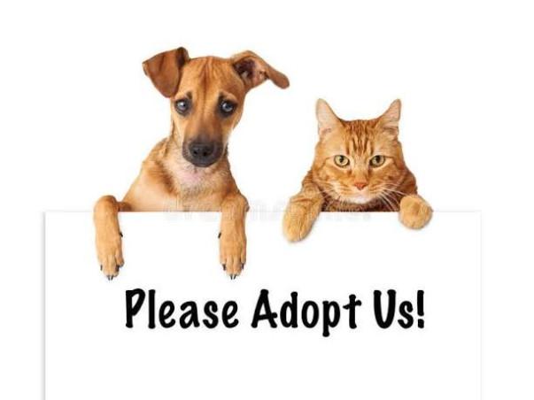 Please Help street Dogs & Cats