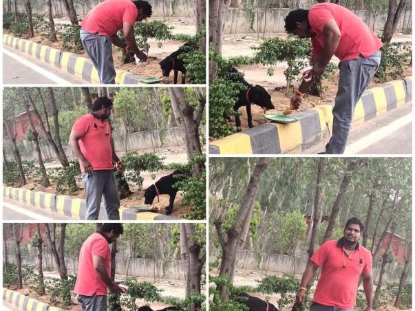 Help Street Dogs In Feeding