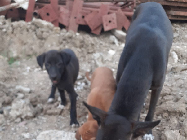 Help feed stray dogs