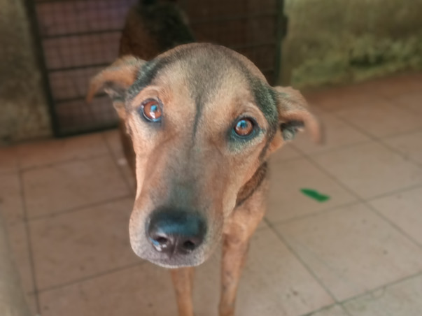 Saving Auroville stray dogs