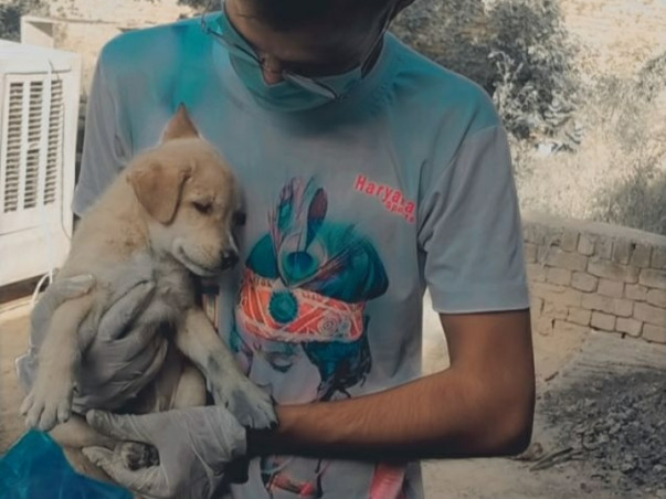 Animals rescue and treatment