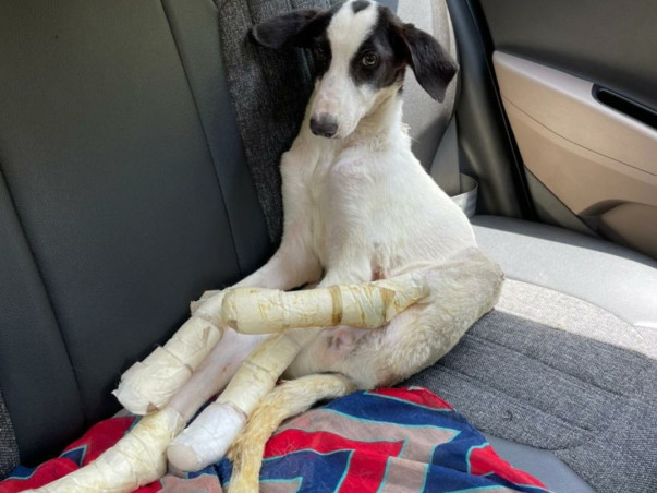 Help LUNA- The Epileptic Lab FLY HOME