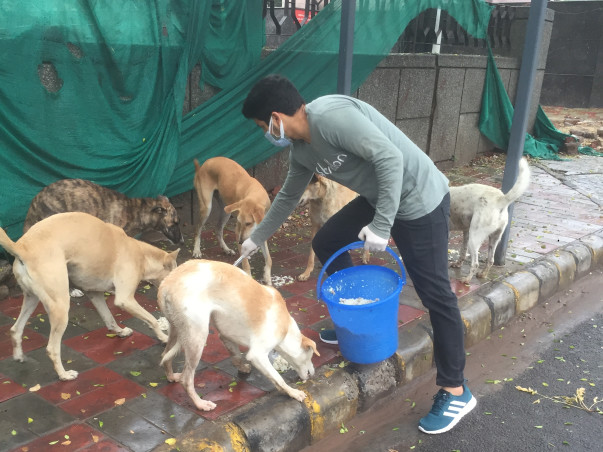 Help Me Raise Funds For Strays Of Delhi