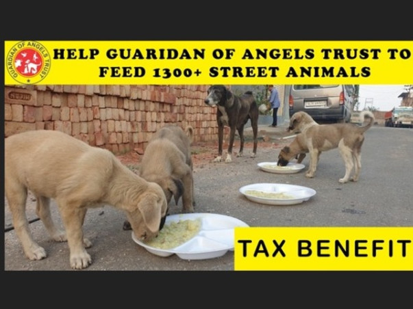 Help Guardian Of Angels Trust To Feed 1300+ Street Animals