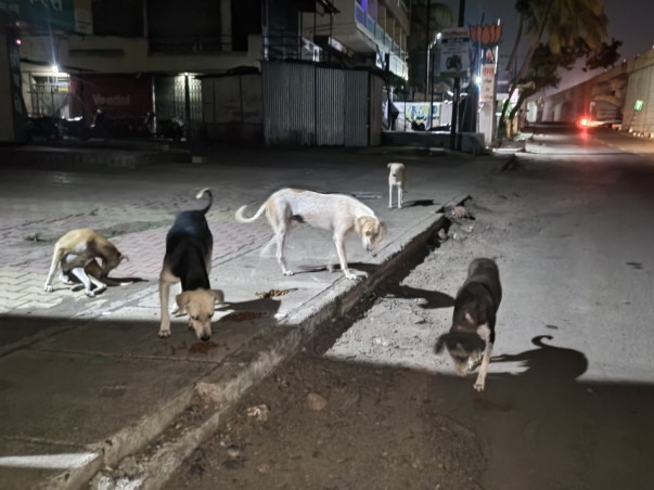 Street Dog Food