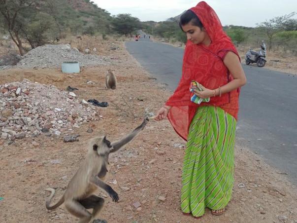 Feeding Stray Animals
