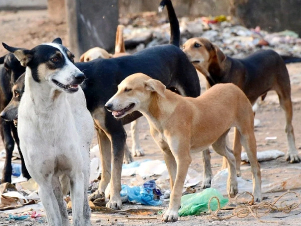 Help Us Feed Stray Animals & Vaccine For Stray Dog Post Covid - 19