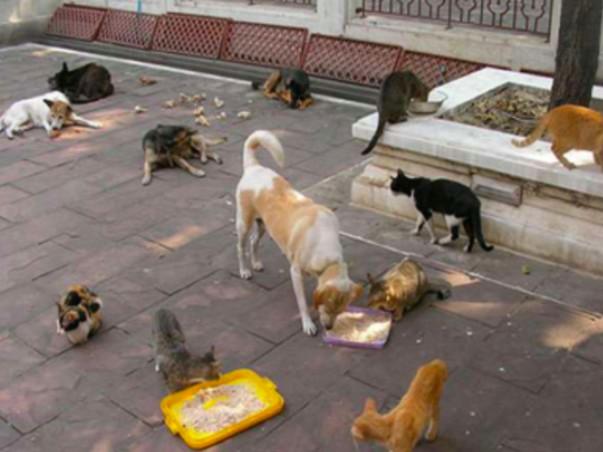 Help Spay The Stray Animals