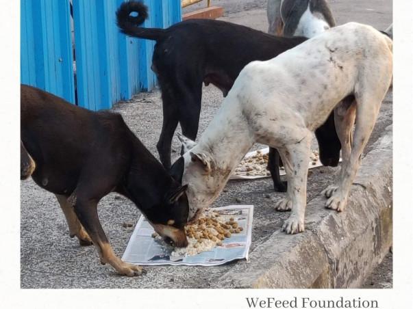 WeFeed Foundation needs your urgent help for Sterilisation and Feeding