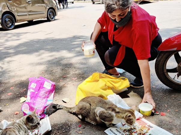 FEED OUR ANIMAL FRIENDS - MUMBAI HELP INITIATIVE