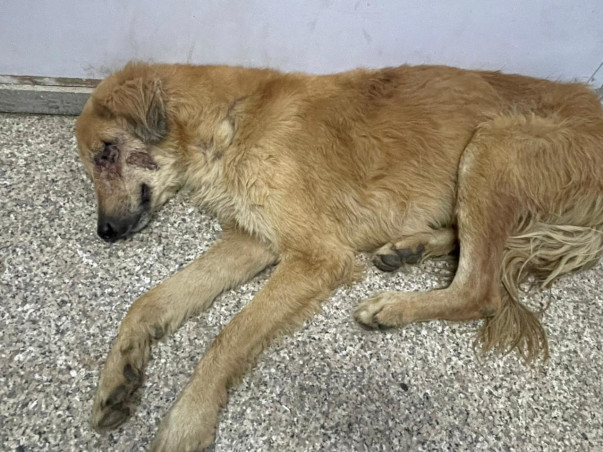 Sandy Bella And Many Other Babies Need Your Help