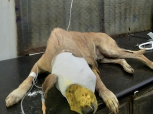 Help to buy an animal ambulance to rescue stray animals.