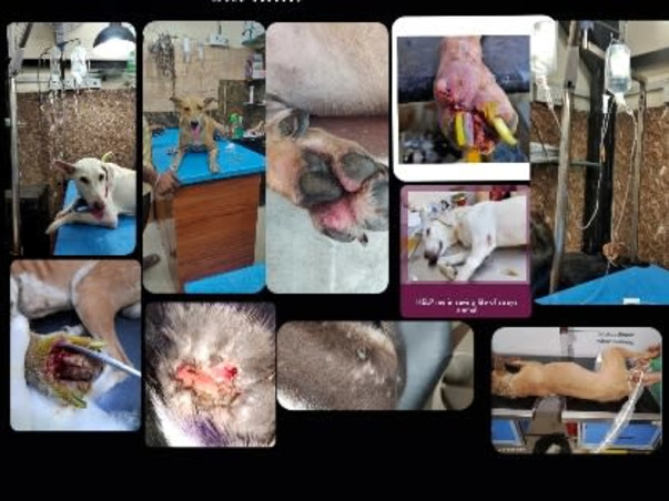 Help Me In Saving Life Of The Stray Animals