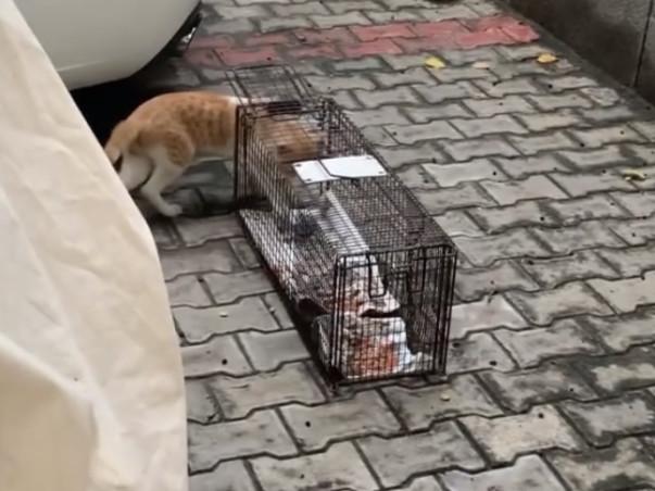 Help us sterilise stray cats in New Delhi, India